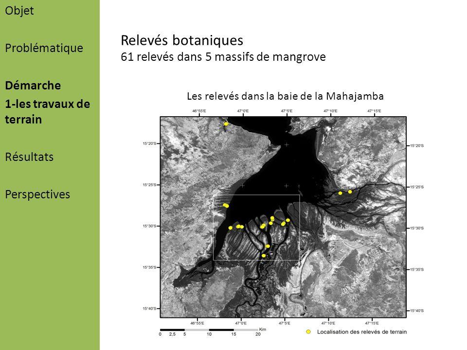 Objet Problématique Démarche 1-les travaux de terrain Résultats Perspectives Relevés botaniques 61 relevés dans 5 massifs de mangrove Les relevés dans