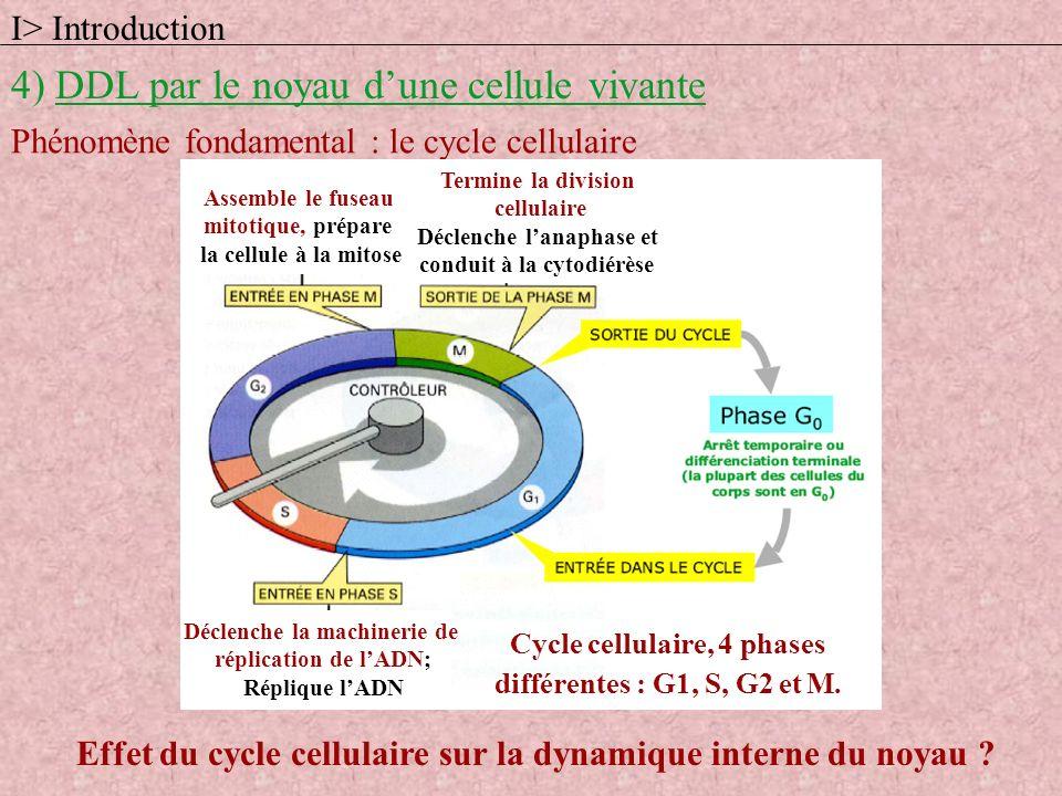 Cycle cellulaire, 4 phases différentes : G1, S, G2 et M. I> Introduction 4) DDL par le noyau dune cellule vivante Phénomène fondamental : le cycle cel