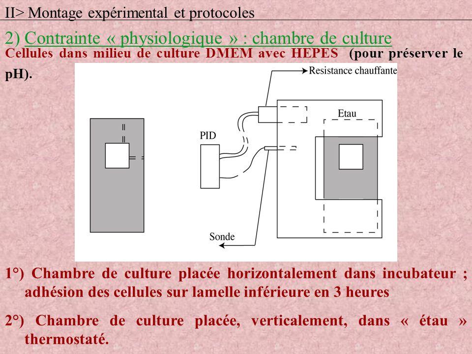 Cellules dans milieu de culture DMEM avec HEPES (pour préserver le pH). 1°) Chambre de culture placée horizontalement dans incubateur ; adhésion des c