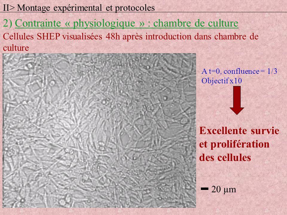 Cellules SHEP visualisées 48h après introduction dans chambre de culture A t=0, confluence = 1/3 Objectif x10 Excellente survie et prolifération des c