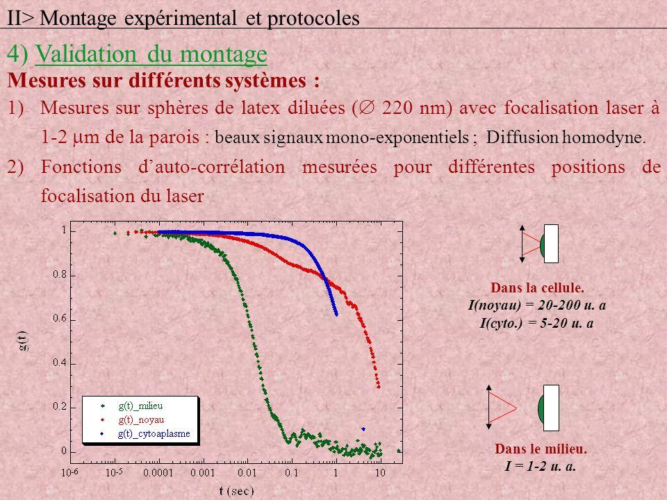 Dans la cellule. I(noyau) = 20-200 u. a I(cyto.) = 5-20 u. a Dans le milieu. I = 1-2 u. a. II> Montage expérimental et protocoles 4) Validation du mon