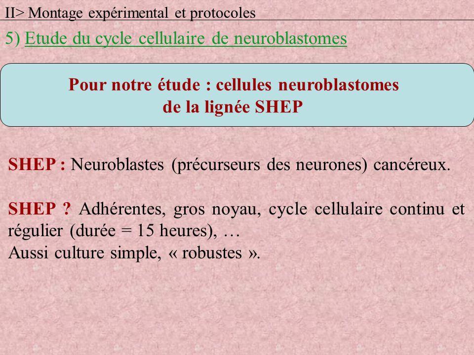 SHEP : Neuroblastes (précurseurs des neurones) cancéreux. SHEP ? Adhérentes, gros noyau, cycle cellulaire continu et régulier (durée = 15 heures), … A