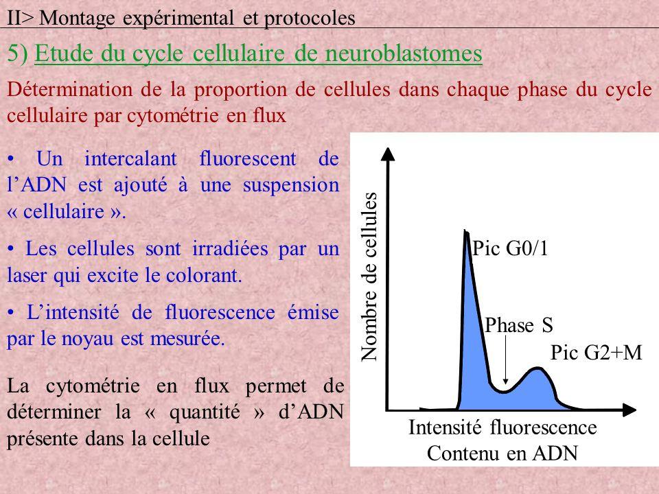 Détermination de la proportion de cellules dans chaque phase du cycle cellulaire par cytométrie en flux Un intercalant fluorescent de lADN est ajouté