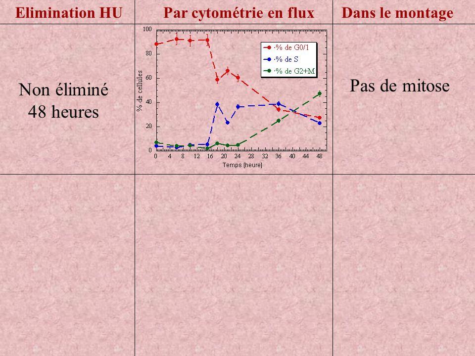 Pas de mitose Par cytométrie en fluxDans le montageElimination HU Non éliminé 48 heures