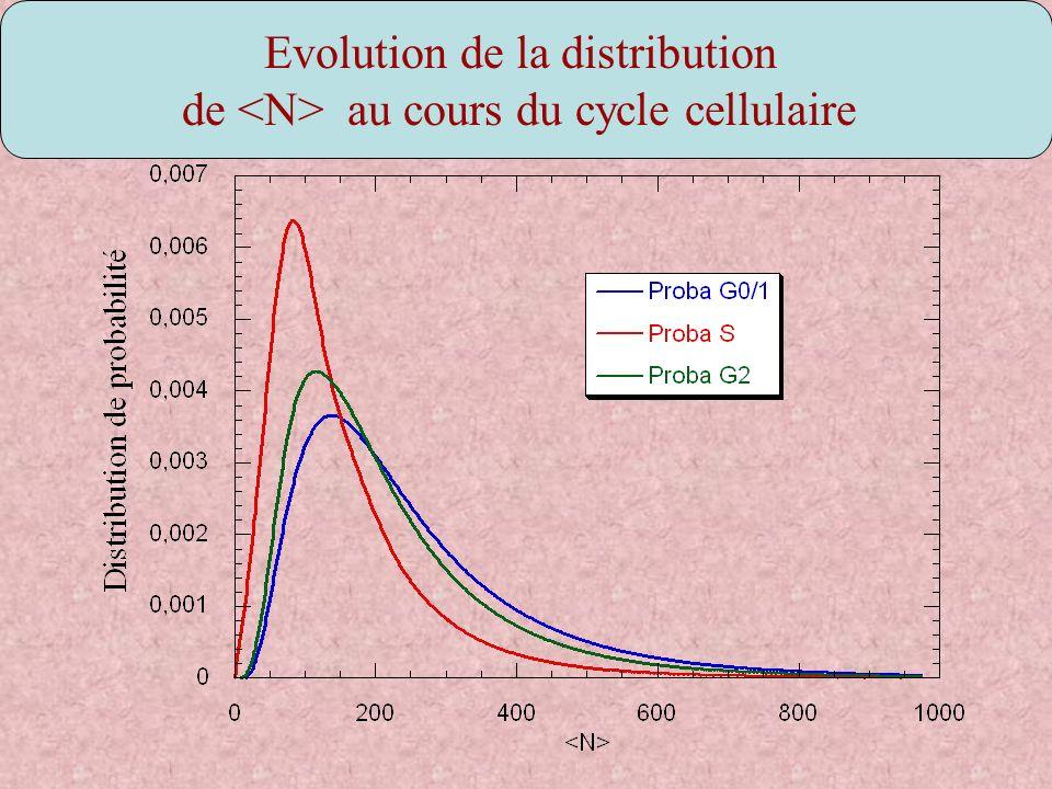 Evolution de la distribution de au cours du cycle cellulaire