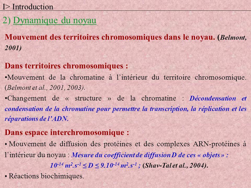 I> Introduction 2) Dynamique du noyau BIOLOGIEPHYSIQUE ChromatinePolymère ProtéinesParticules colloïdales Noyau => Système hors équilibre car système actif : activité biochimique continuelle ; en permanence réactions chimiques consommant de lénergie et produisant de la chaleur (en particulier, synthèse de lARN : transcription, et de lADN : réplication).