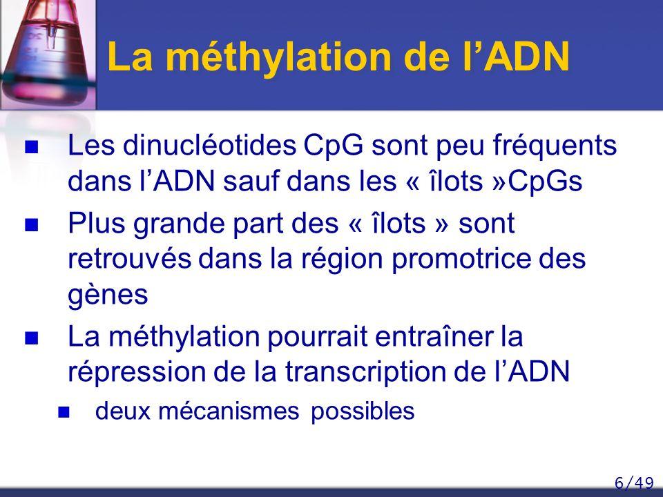 6/49 La méthylation de lADN Les dinucléotides CpG sont peu fréquents dans lADN sauf dans les « îlots »CpGs Plus grande part des « îlots » sont retrouv