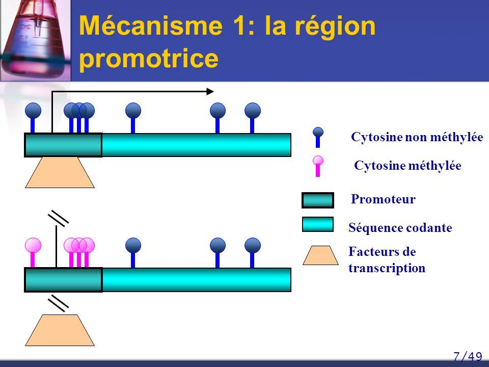 7/49 Mécanisme 1: la région promotrice Cytosine non méthylée Cytosine méthylée Promoteur Séquence codante Facteurs de transcription