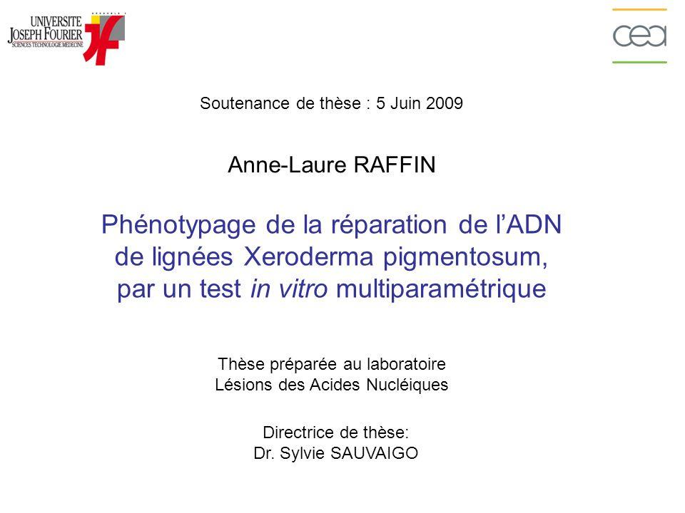 LES RÔLES DE XPA ET XPC Anne-Laure RAFFIN – Soutenance de thèse 5 Juin 2009 Substrats: lésions volumineuses de lADN Introduction: la réparation de lADN XPC: – Spécificité dintervention: uniquement réparation globale du génome – Fonction: Reconnaissance de lADN endommagé (1 er facteur à intervenir) XPA: – Spécificité dintervention: réparation globale du génome et réparation couplée à la transcription – Interactions avec dautres facteurs de la NER: TFIIH, ERCC1 et RPA – Fonction(s): « Chef dorchestre » de la NER: de la reconnaissance du dommage à la resynthèse de lADN = Rôle complexe qui reste encore à clarifier
