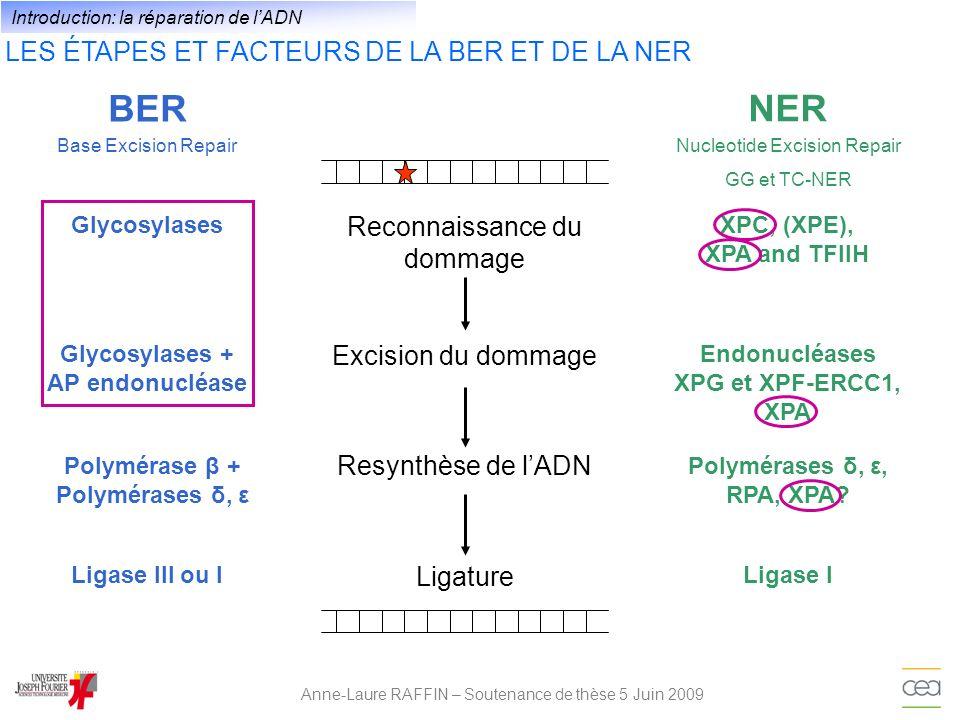 LES ÉTAPES ET FACTEURS DE LA BER ET DE LA NER Anne-Laure RAFFIN – Soutenance de thèse 5 Juin 2009 Reconnaissance du dommage BER NER XPC, (XPE), XPA an