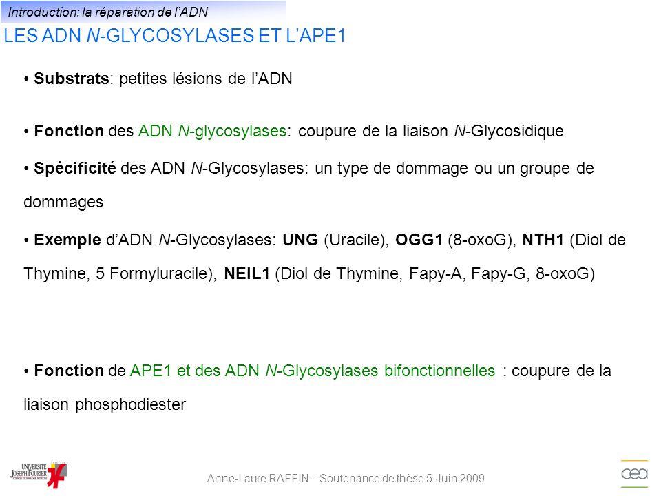 LES ADN N-GLYCOSYLASES ET LAPE1 Anne-Laure RAFFIN – Soutenance de thèse 5 Juin 2009 Substrats: petites lésions de lADN Introduction: la réparation de
