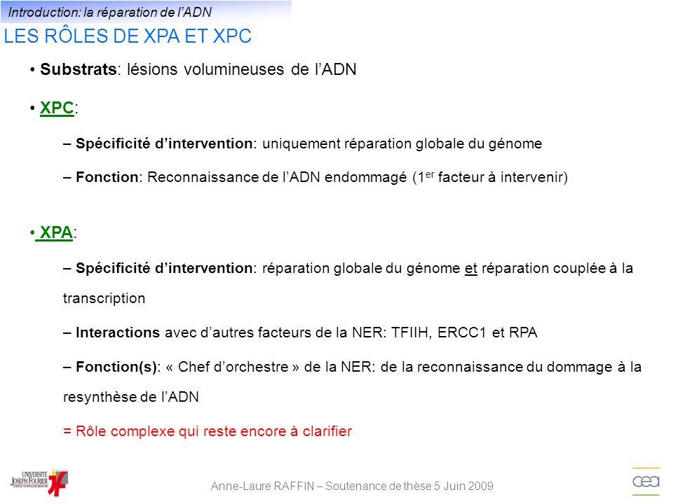 LES RÔLES DE XPA ET XPC Anne-Laure RAFFIN – Soutenance de thèse 5 Juin 2009 Substrats: lésions volumineuses de lADN Introduction: la réparation de lAD