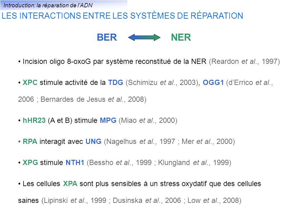 BERNER Incision oligo 8-oxoG par système reconstitué de la NER (Reardon et al., 1997) XPC stimule activité de la TDG (Schimizu et al., 2003), OGG1 (dE