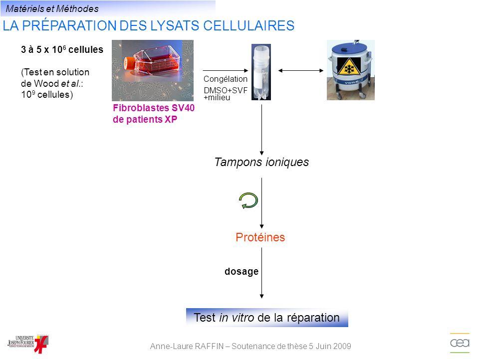 LA PRÉPARATION DES LYSATS CELLULAIRES Anne-Laure RAFFIN – Soutenance de thèse 5 Juin 2009 Tampons ioniques Protéines Test in vitro de la réparation do