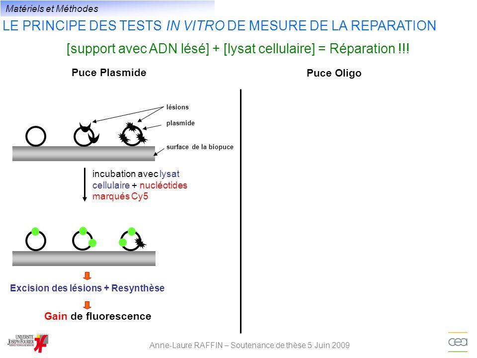 LE PRINCIPE DES TESTS IN VITRO DE MESURE DE LA REPARATION Anne-Laure RAFFIN – Soutenance de thèse 5 Juin 2009 [support avec ADN lésé] + [lysat cellula