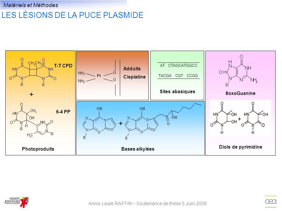 LES LÉSIONS DE LA PUCE PLASMIDE Anne-Laure RAFFIN – Soutenance de thèse 5 Juin 2009 8oxoGuanine Diols de pyrimidine 6-4 PP Photoproduits + T-T CPD N N