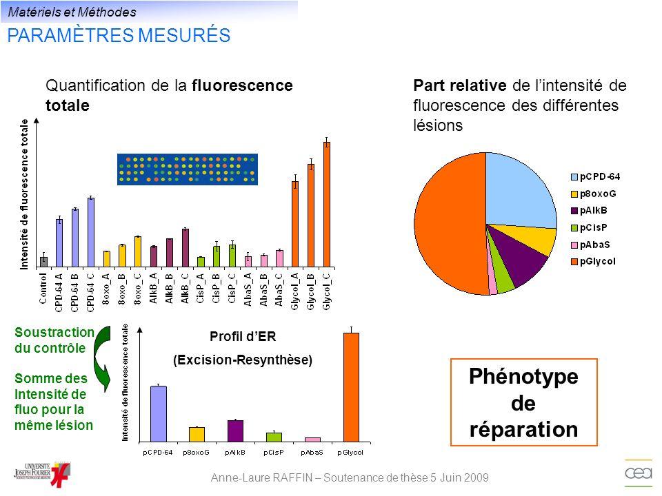 PARAMÈTRES MESURÉS Anne-Laure RAFFIN – Soutenance de thèse 5 Juin 2009 Phénotype de réparation Quantification de la fluorescence totale Matériels et M