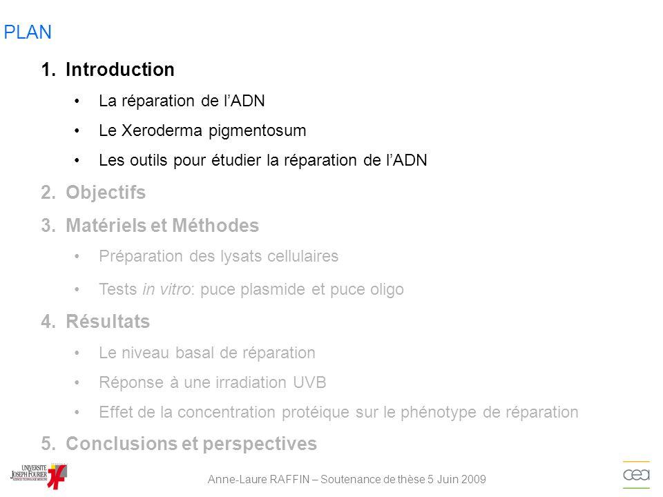 Anne-Laure RAFFIN – Soutenance de thèse 5 Juin 2009 Résultats: Effet dune irradiation UVB CYCLE CELLULAIRE 24H APRÈS UNE IRRADIATION UVB 0 J/m² 5 J/m² 20 J/m² 0J/m²20J/m² 0J/m² 20J/m² 0J/m² 20J/m² Fibroblastes * * ** * *