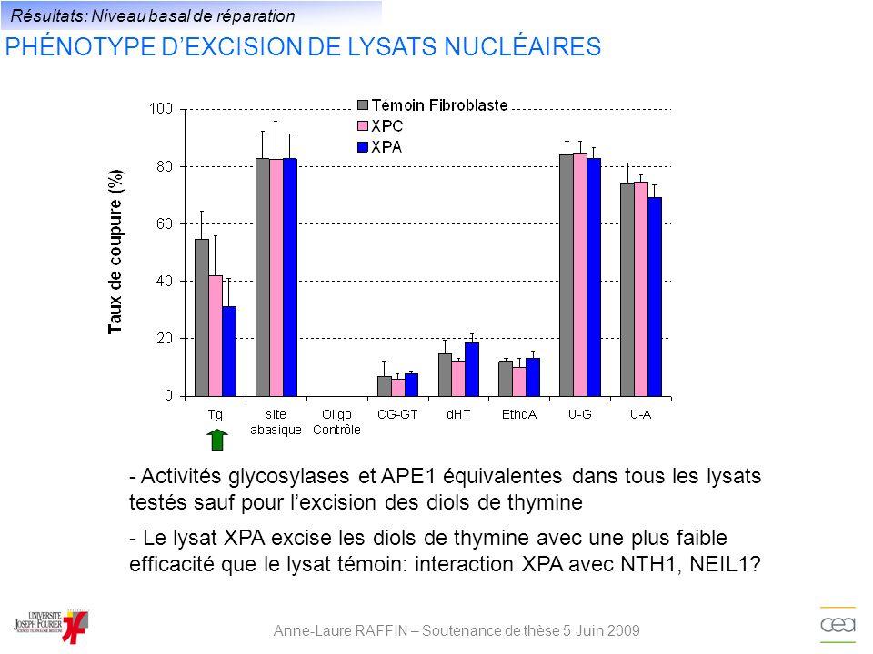 Anne-Laure RAFFIN – Soutenance de thèse 5 Juin 2009 Résultats: Niveau basal de réparation PHÉNOTYPE DEXCISION DE LYSATS NUCLÉAIRES - Activités glycosy