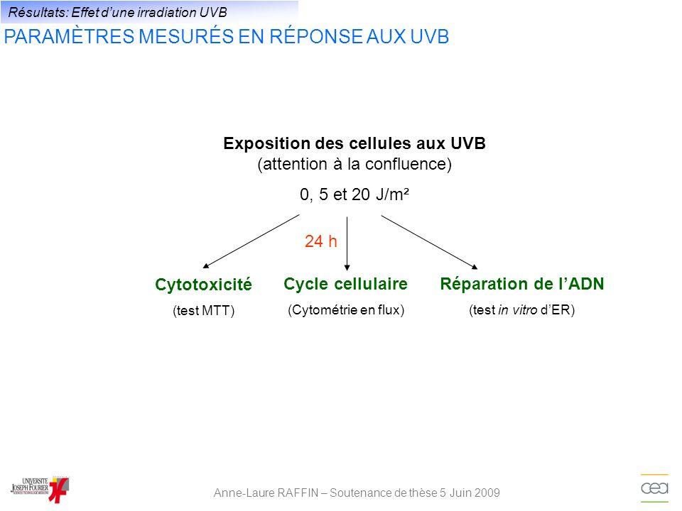 Anne-Laure RAFFIN – Soutenance de thèse 5 Juin 2009 Résultats: Effet dune irradiation UVB PARAMÈTRES MESURÉS EN RÉPONSE AUX UVB Exposition des cellule