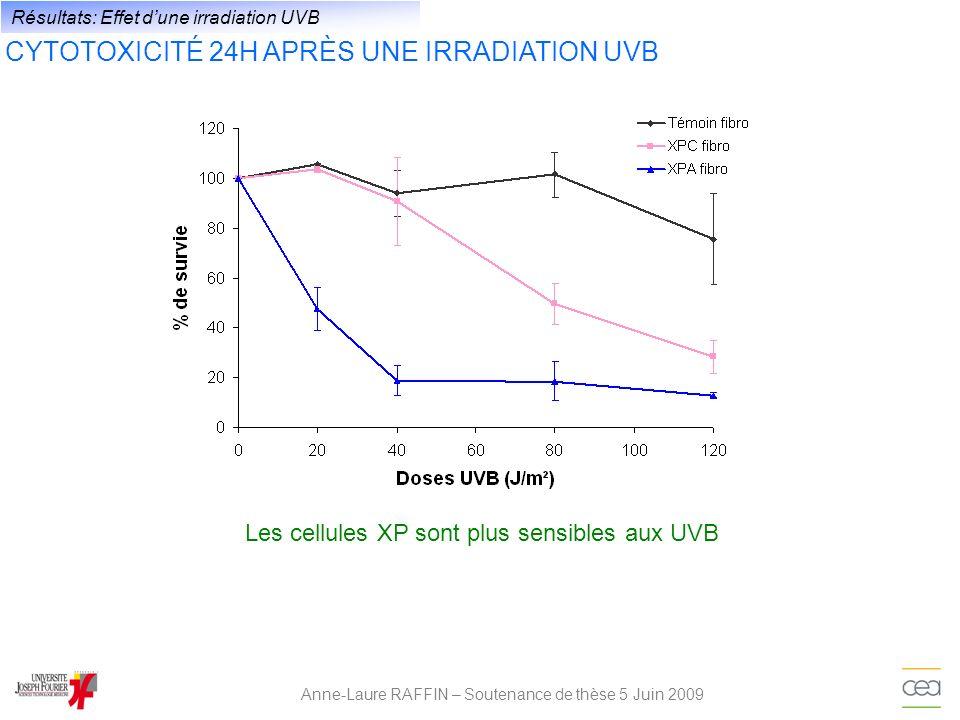 Anne-Laure RAFFIN – Soutenance de thèse 5 Juin 2009 Résultats: Effet dune irradiation UVB CYTOTOXICITÉ 24H APRÈS UNE IRRADIATION UVB Les cellules XP s