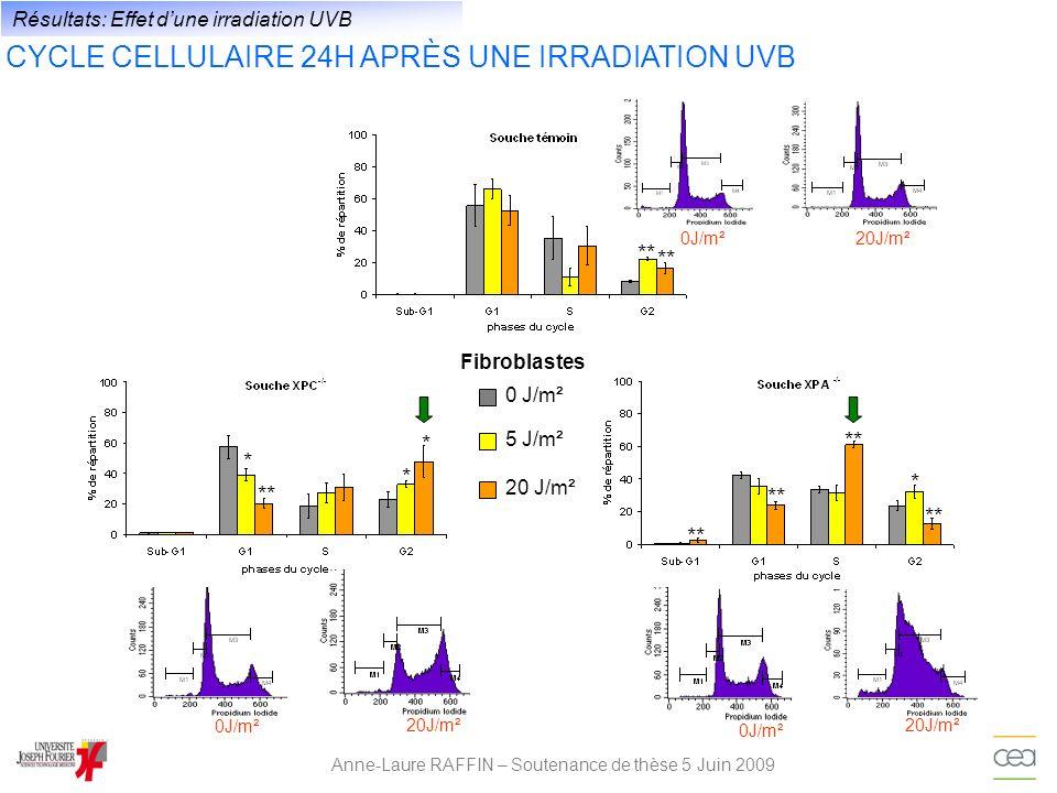 Anne-Laure RAFFIN – Soutenance de thèse 5 Juin 2009 Résultats: Effet dune irradiation UVB CYCLE CELLULAIRE 24H APRÈS UNE IRRADIATION UVB 0 J/m² 5 J/m²