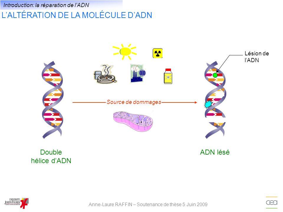 LES RÉPONSES CELLULAIRES FACE AUX DOMMAGES DE LADN Anne-Laure RAFFIN – Soutenance de thèse 5 Juin 2009 cellule Arrêt réplicationArrêt de la transcription Source endogène ou exogène de dommage Lésions de lADN Mutagénèse - Restauration de la séquence dADN - Reprise du cycle cellulaire Réparation de lADN Cancérogenèse Apoptose Introduction: la réparation de lADN