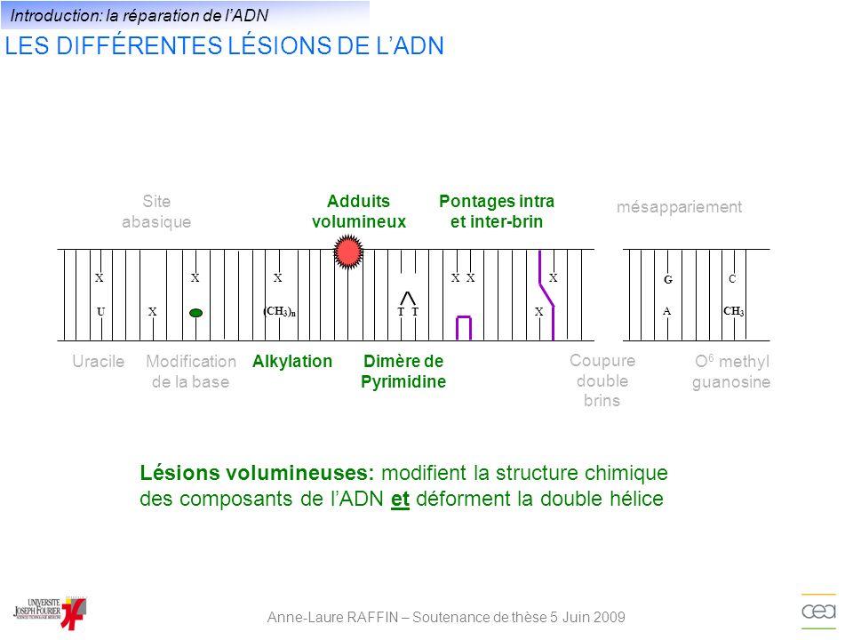 LES DIFFÉRENTS VOIES DE RÉPARATION DE LADN Anne-Laure RAFFIN – Soutenance de thèse 5 Juin 2009 XU XXX A G T X X CH 3 C (CH 3 ) n T XX BERNERNHEJ / HRMMRDR BER: Base Excision Repair NER: Nucleotide Excision Repair NHEJ: Non-Homologous End joining HR: Homologous Recombination MMR: MisMatch Repair DR: Direct Reversal Introduction: la réparation de lADN