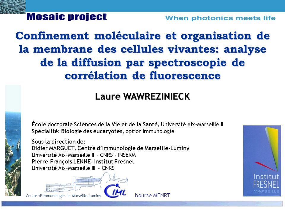 Confinement moléculaire et organisation de la membrane des cellules vivantes: analyse de la diffusion par spectroscopie de corrélation de fluorescence