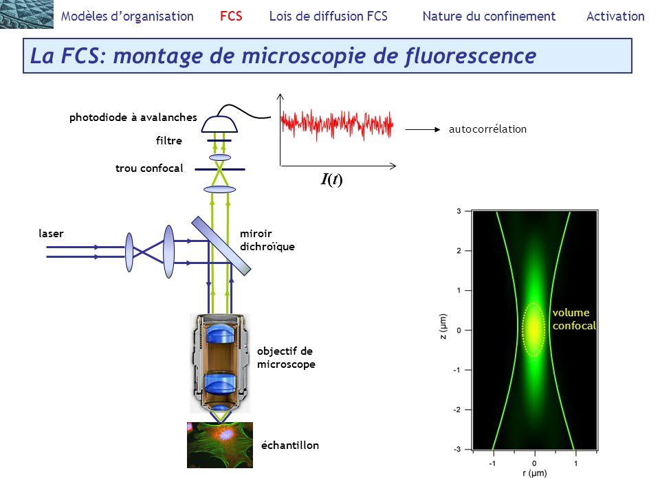 Modèles dorganisation FCS Lois de diffusion FCS Nature du confinement Activation La FCS: montage de microscopie de fluorescence laser miroir dichroïqu