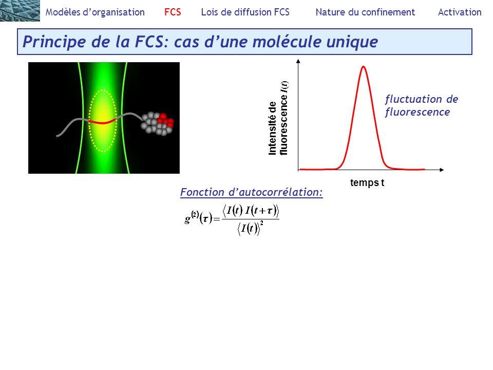 Modèles dorganisation FCS Lois de diffusion FCS Nature du confinement Activation Principe de la FCS: cas dune molécule unique Fonction dautocorrélation: Intensité defluorescence I ( t ) temps t fluctuation de fluorescence