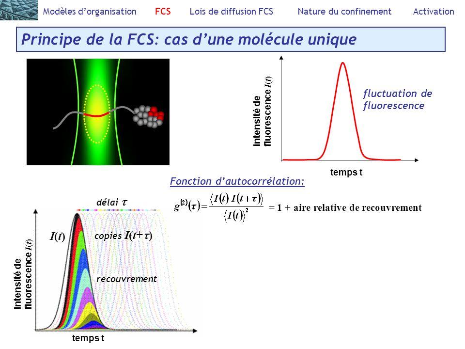 =1+ Modèles dorganisation FCS Lois de diffusion FCS Nature du confinement Activation Principe de la FCS: cas dune molécule unique Fonction dautocorrélation: = 1 + aire relative de recouvrement Intensité defluorescence I ( t ) temps t fluctuation de fluorescence I(t)I(t) copies I(t+ ) recouvrement délai temps t Intensité defluorescence I ( t )