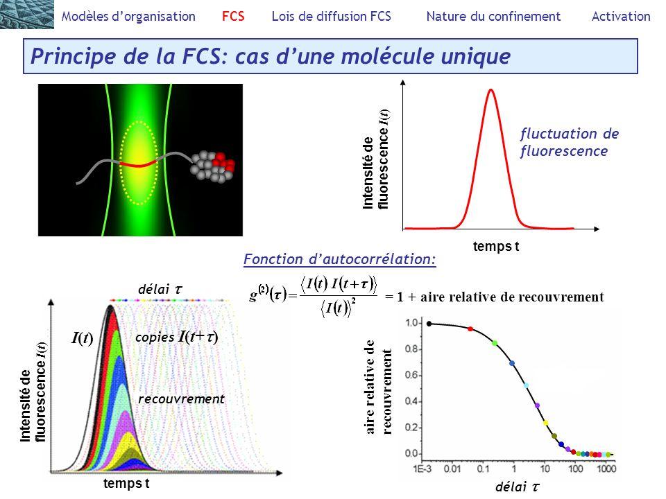 =1+ Modèles dorganisation FCS Lois de diffusion FCS Nature du confinement Activation Principe de la FCS: cas dune molécule unique Fonction dautocorrélation: = 1 + aire relative de recouvrement Intensité defluorescence I ( t ) temps t fluctuation de fluorescence I(t)I(t) copies I(t+ ) recouvrement aire relative de recouvrement délai temps t Intensité defluorescence I ( t )