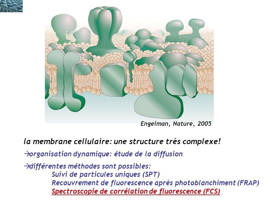la membrane cellulaire: une structure très complexe.