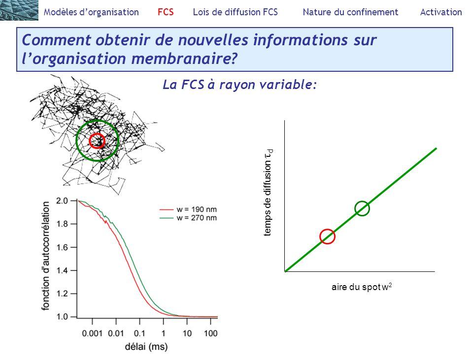 Comment obtenir de nouvelles informations sur lorganisation membranaire? Modèles dorganisation FCS Lois de diffusion FCS Nature du confinement Activat