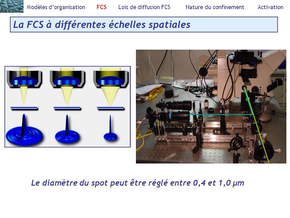Modèles dorganisation FCS Lois de diffusion FCS Nature du confinement Activation La FCS à différentes échelles spatiales Le diamètre du spot peut être réglé entre 0,4 et 1,0 µm