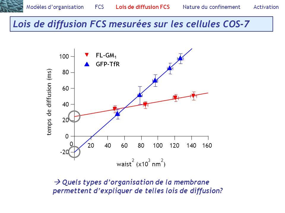 Modèles dorganisation FCS Lois de diffusion FCS Nature du confinement Activation Lois de diffusion FCS mesurées sur les cellules COS-7 100 80 60 40 20 0 -20 temps de diffusion (ms) 16014012010080604020 0 waist 2 (x10 3 nm 2 ) FL-GM 1 GFP-TfR Quels types dorganisation de la membrane permettent dexpliquer de telles lois de diffusion?