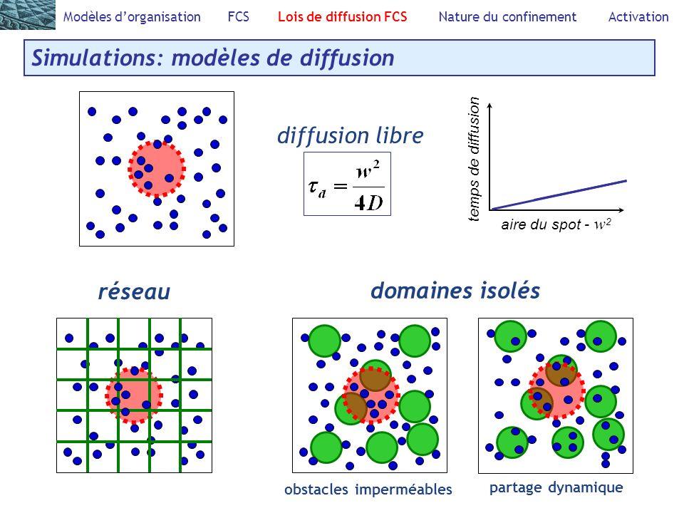 Modèles dorganisation FCS Lois de diffusion FCS Nature du confinement Activation Simulations: modèles de diffusion diffusion libre aire du spot - w 2 temps de diffusion obstacles imperméables domaines isolés partage dynamique réseau