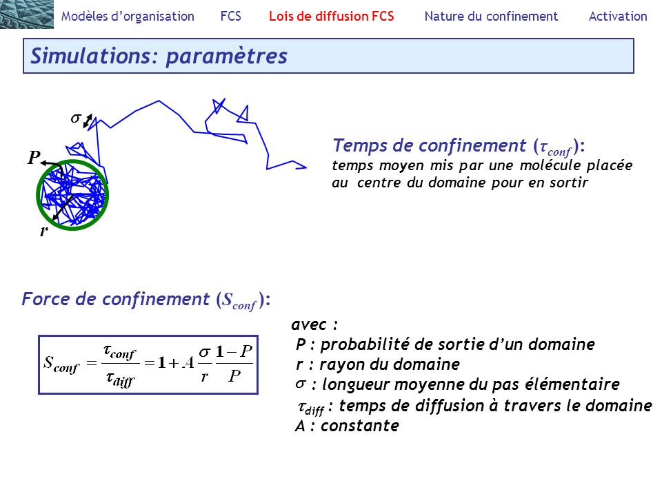 Modèles dorganisation FCS Lois de diffusion FCS Nature du confinement Activation Simulations: paramètres Force de confinement ( S conf ): Temps de con