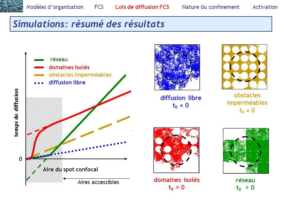 Modèles dorganisation FCS Lois de diffusion FCS Nature du confinement Activation Simulations: résumé des résultats Aires accessibles domaines isolés t