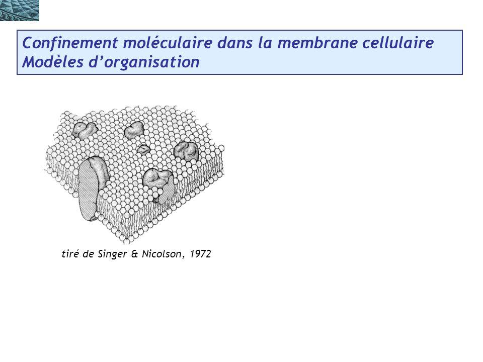 tiré de Singer & Nicolson, 1972 Confinement moléculaire dans la membrane cellulaire Modèles dorganisation