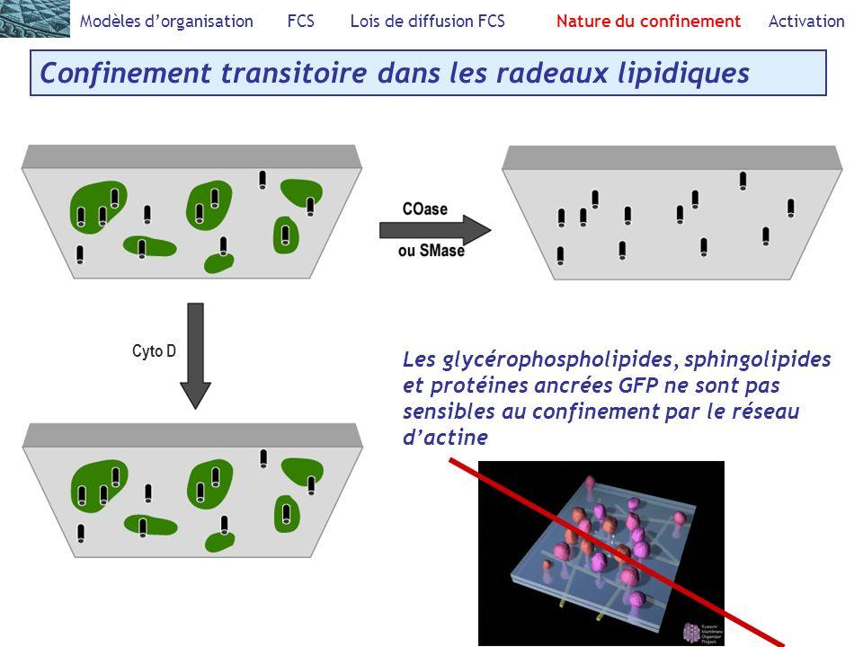 Modèles dorganisation FCS Lois de diffusion FCS Nature du confinement Activation Confinement transitoire dans les radeaux lipidiques Les glycérophospholipides, sphingolipides et protéines ancrées GFP ne sont pas sensibles au confinement par le réseau dactine Cyto D