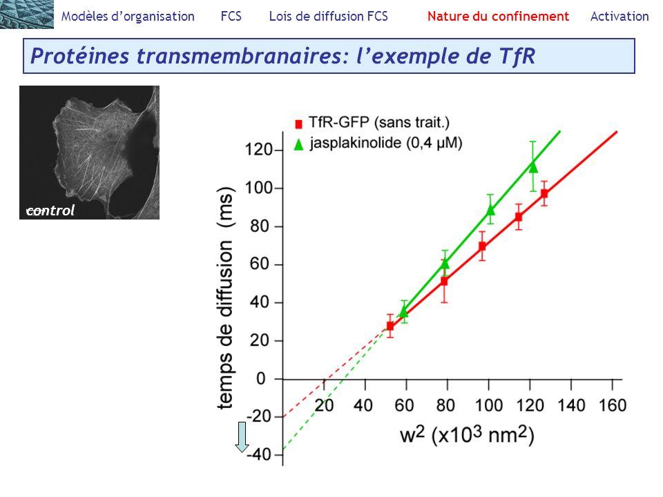 Modèles dorganisation FCS Lois de diffusion FCS Nature du confinement Activation Protéines transmembranaires: lexemple de TfR control