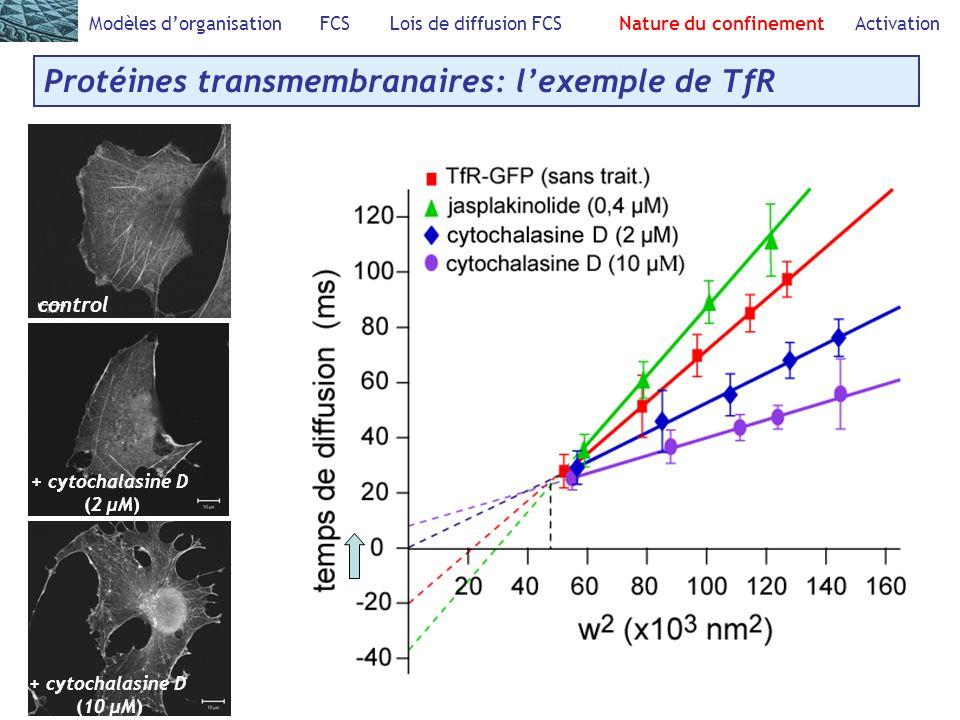 Modèles dorganisation FCS Lois de diffusion FCS Nature du confinement Activation Protéines transmembranaires: lexemple de TfR control + cytochalasine D (2 μM) + cytochalasine D (10 μM)