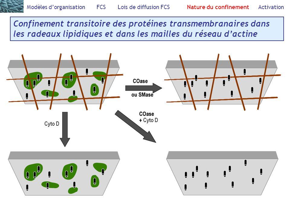 Modèles dorganisation FCS Lois de diffusion FCS Nature du confinement Activation Confinement transitoire des protéines transmembranaires dans les radeaux lipidiques et dans les mailles du réseau dactine Cyto D