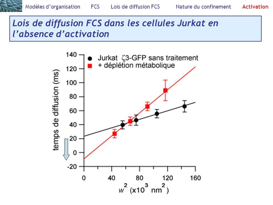 Modèles dorganisation FCS Lois de diffusion FCS Nature du confinement Activation Lois de diffusion FCS dans les cellules Jurkat en labsence dactivatio