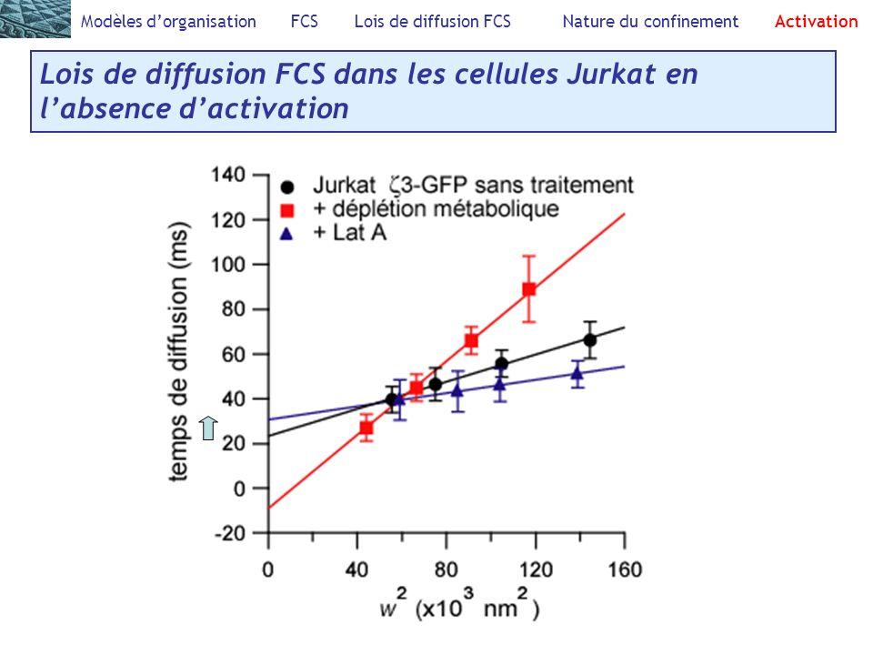 Modèles dorganisation FCS Lois de diffusion FCS Nature du confinement Activation Lois de diffusion FCS dans les cellules Jurkat en labsence dactivation