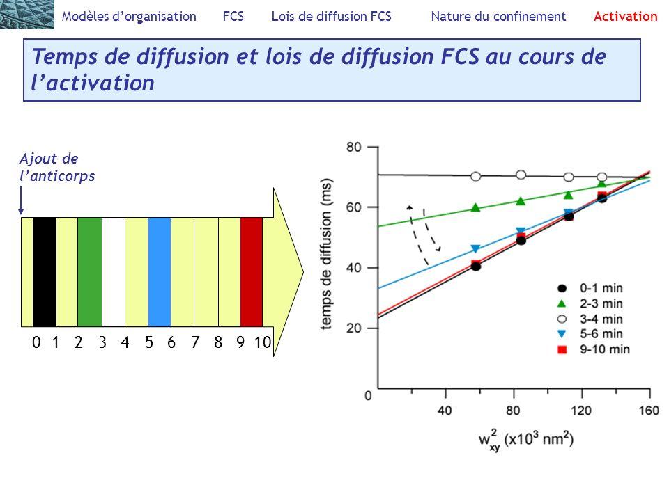 Modèles dorganisation FCS Lois de diffusion FCS Nature du confinement Activation Temps de diffusion et lois de diffusion FCS au cours de lactivation Ajout de lanticorps 012346781095