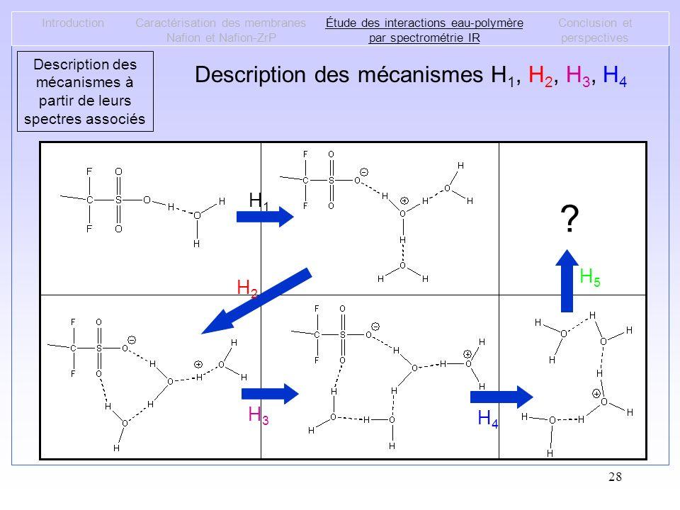 28 Description des mécanismes H 1, H 2, H 3, H 4 IntroductionCaractérisation des membranes Nafion et Nafion-ZrP Étude des interactions eau-polymère pa