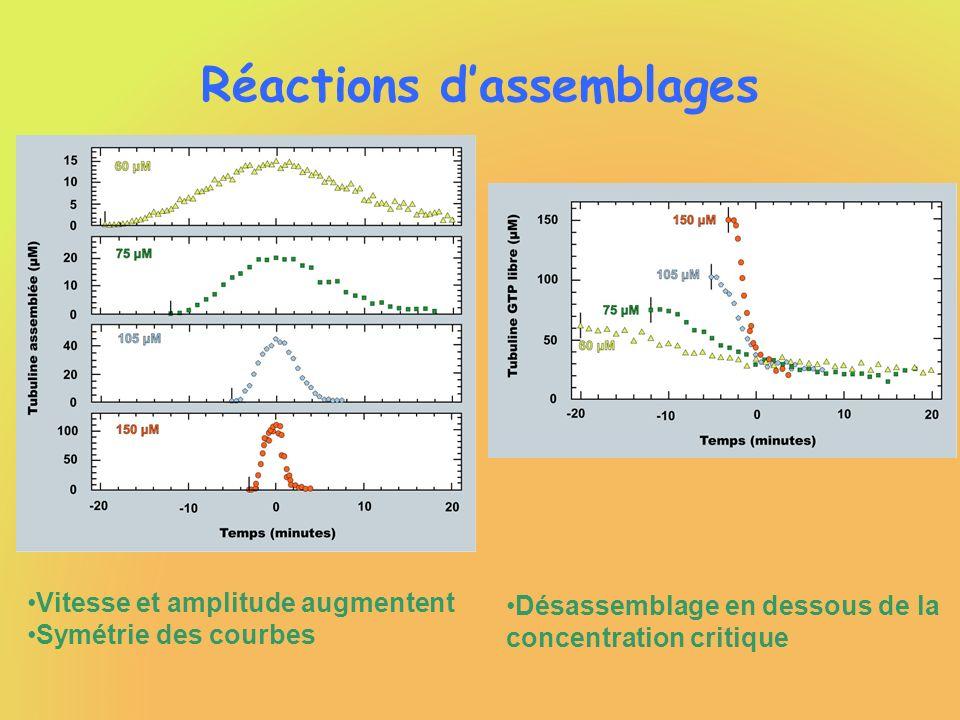 Réactions dassemblages Vitesse et amplitude augmentent Symétrie des courbes Désassemblage en dessous de la concentration critique